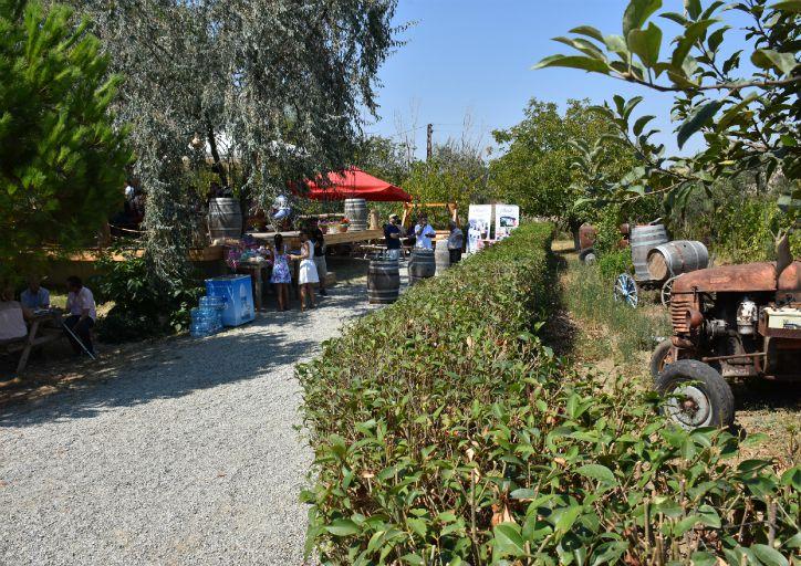 trakya bağbozumu ekoloji festivali